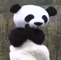 Pandas Gangnam Style