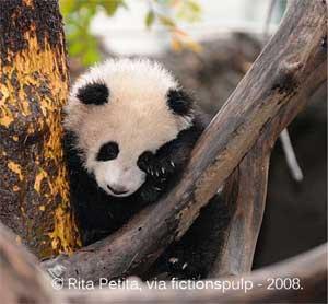 Zhen Zhen Then