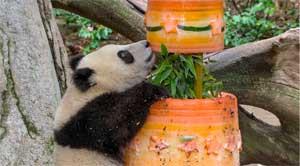 Xiao Liwu enjoys his birthday cake - image copyright Fox5 San Diego