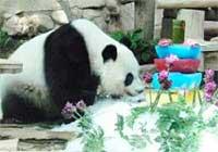 Lin Ping