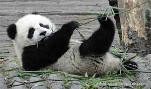 Shi Xiu's Second Cub