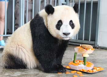 Su Shan Turns 2