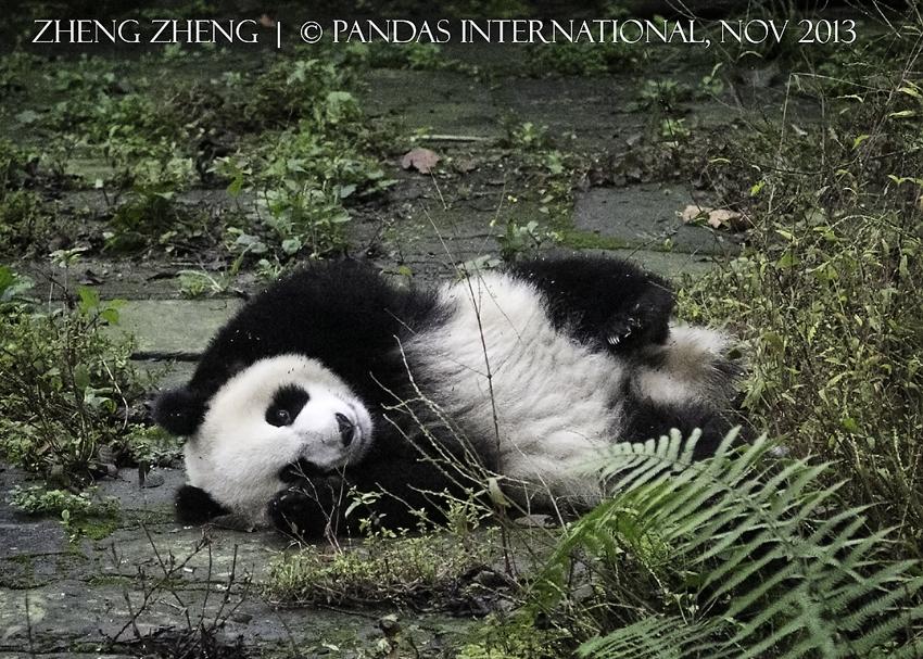 ZhengZheng-7017w