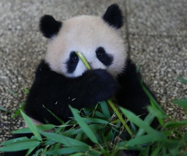 Su Lin's 2011 Cub- June 2012