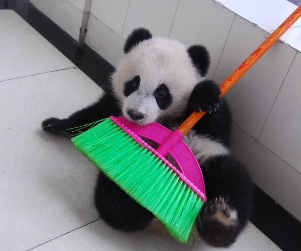 panda with broom