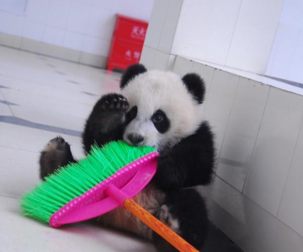 panda with broom2