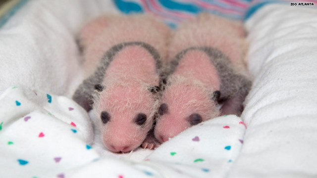 atlanta twins