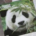 2014 Pandas Calendar