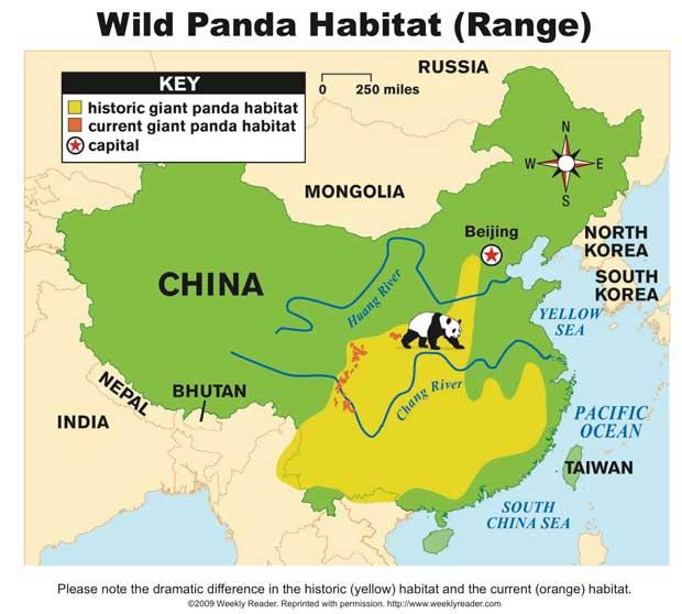 Wild Panda Habitat