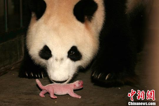 Li Li's cub July 25, 2011