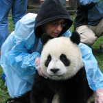 Huan Huan Wolong Sept 2007