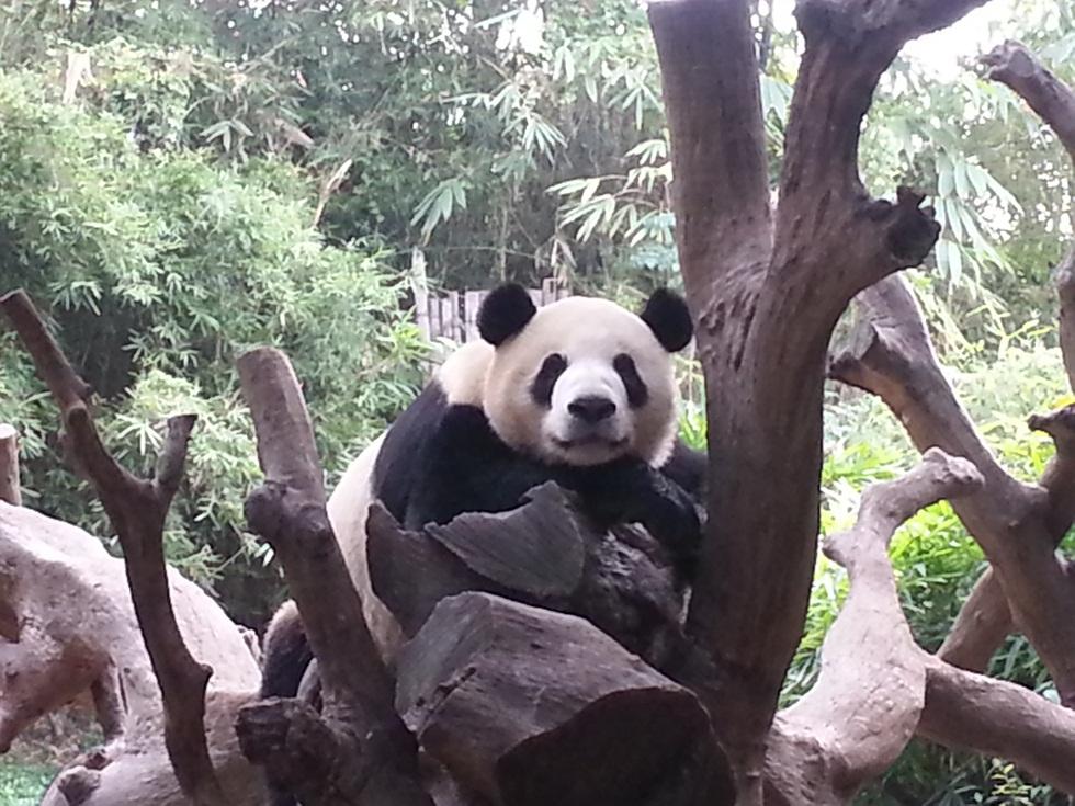 Shen Wei (2)