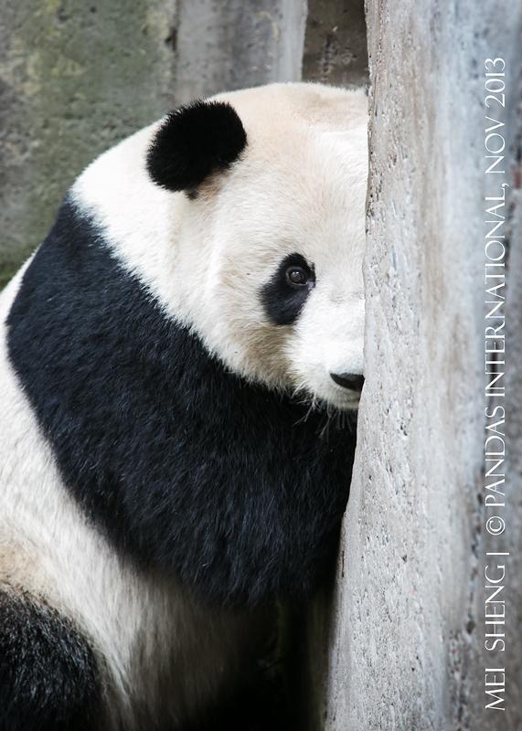MeiSheng-7647-w