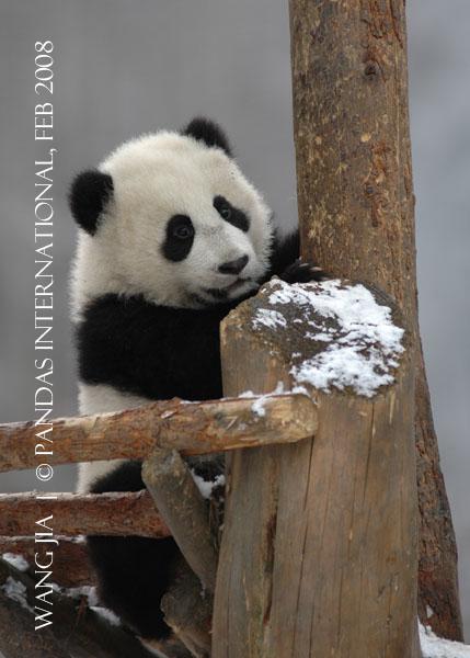 Wang Jia-0208