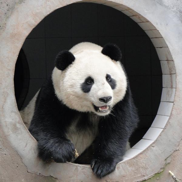 Zhen Zhen (5)sq