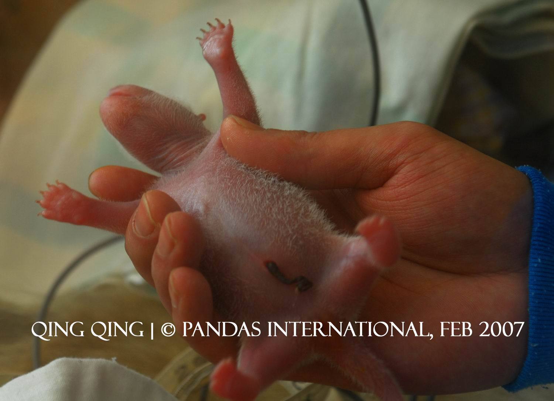1st baby born2007