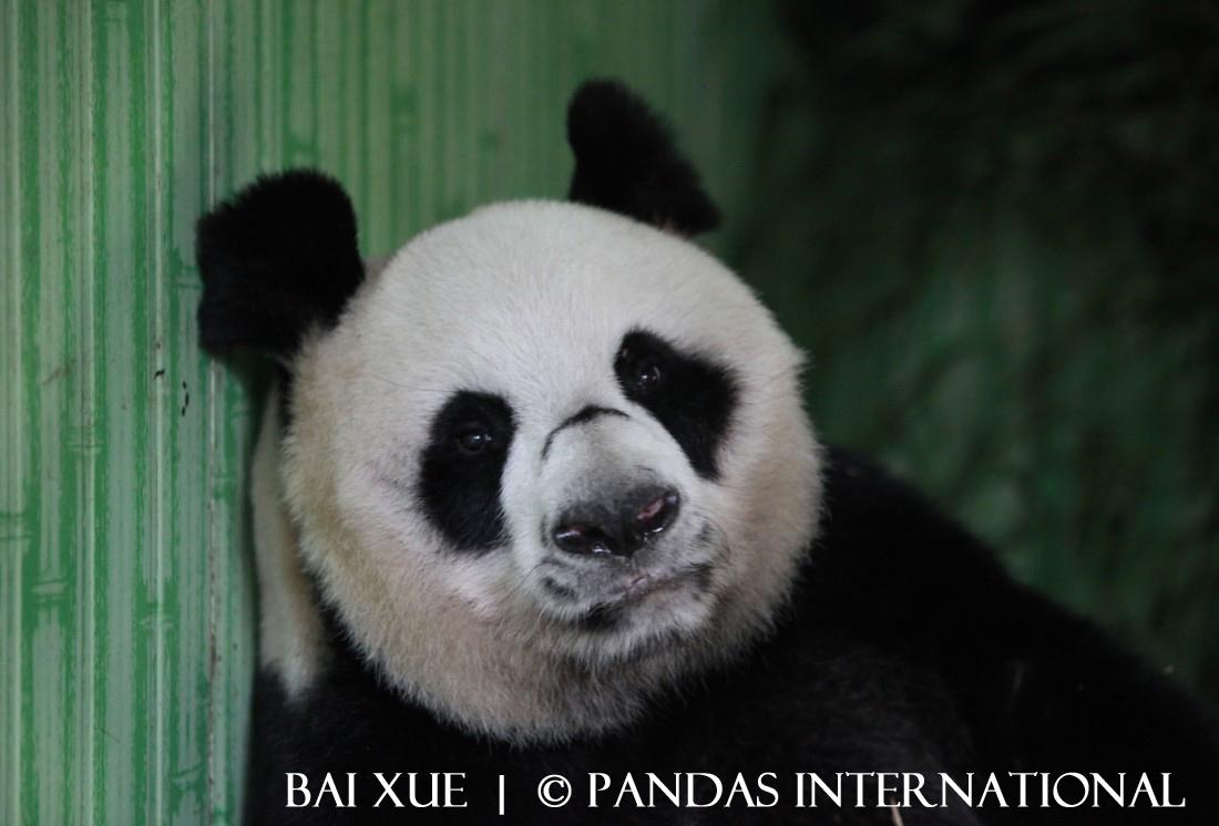 Bai Xue