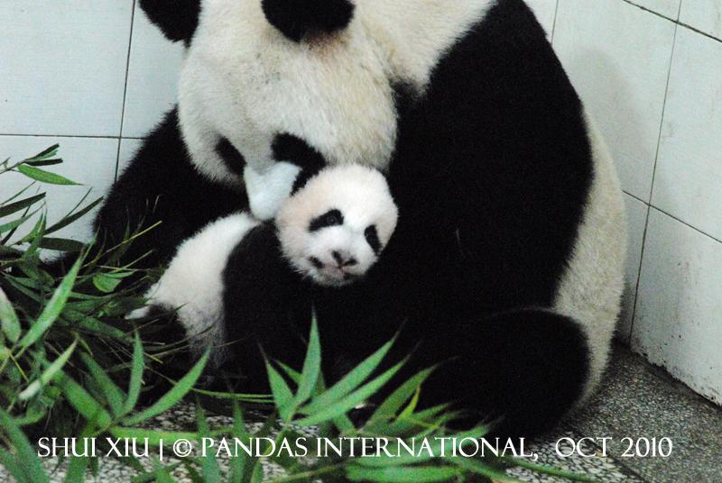 Shui Xiu's 1st Cub- 2