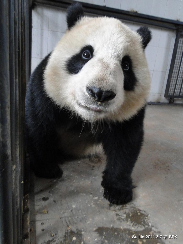 Su Lin (7)