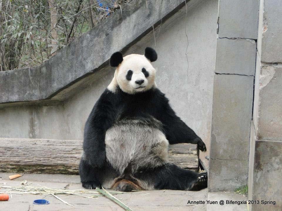 Xi Mei2