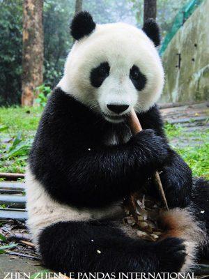 Zhen Zhen (2)