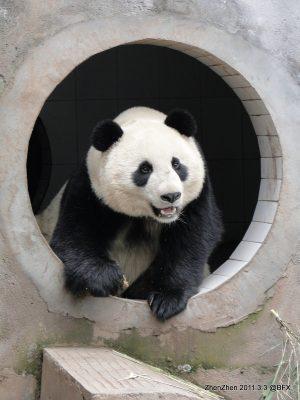 Zhen Zhen (5)
