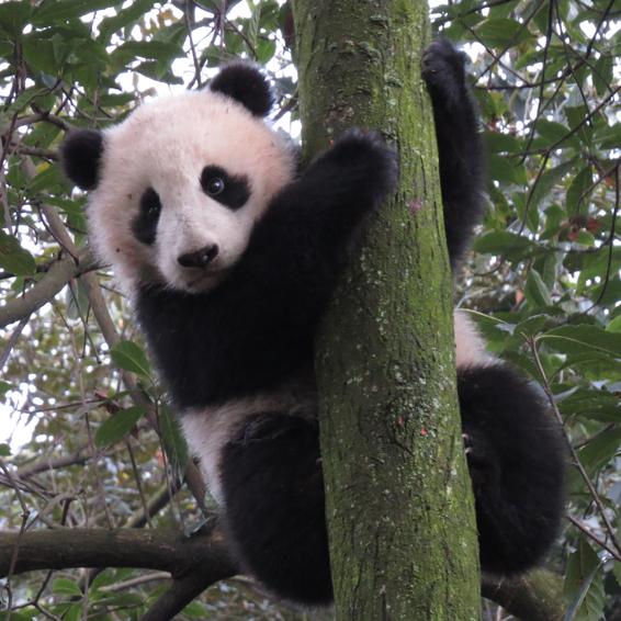 Xi Mei cub 2013 2sq