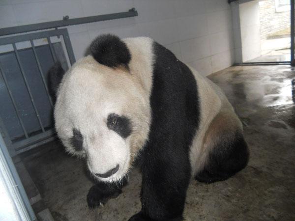 qiangqiang2