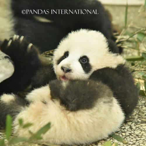 Shen Bin's 2014 cub-2014