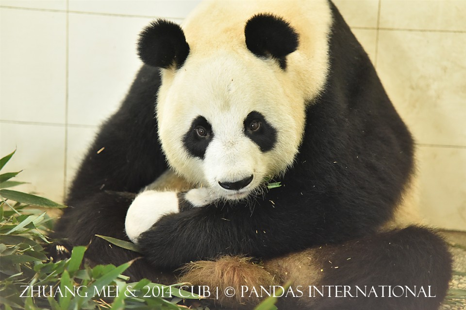 zhuang mei and 2014 cub