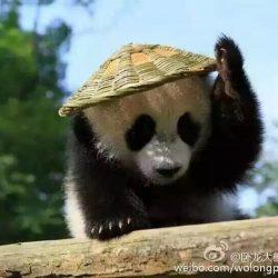 Jun Zhu cub