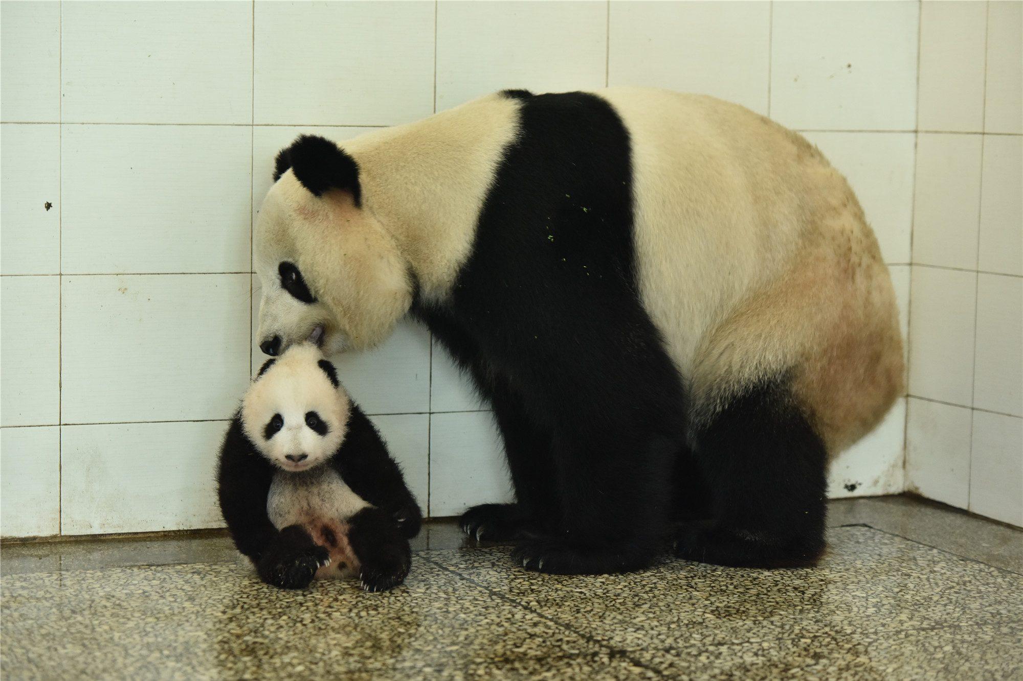 Qian Qian 2015 2nd cub04
